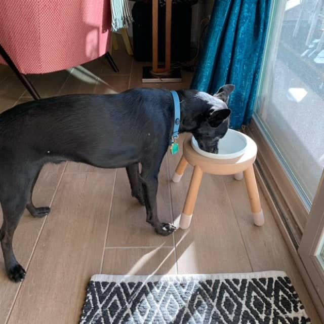A top recommend pet bowl stand