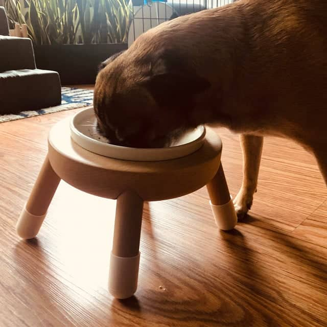 Bowl stand for dog