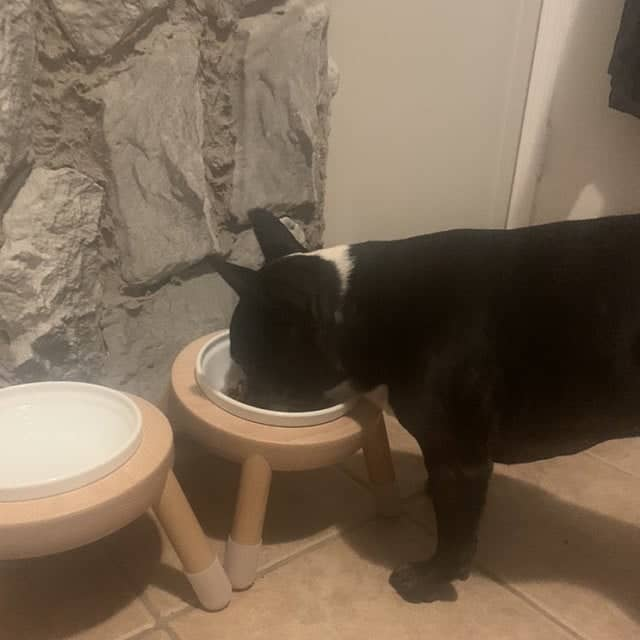 baravo pet bowl stand