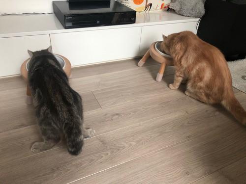 大型貓孩使用的碗架