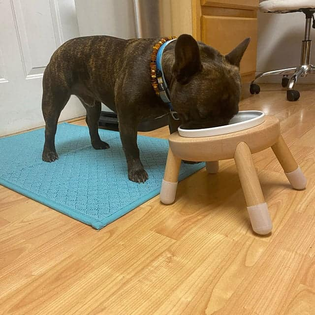 bowl stand perfect fit for french bulldog